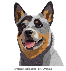 Australian Cattle Dog isolated