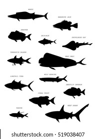 Australian fish silhouette. Hand drawing vector image set.
