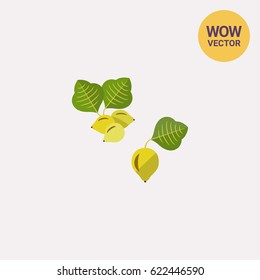 Australian kakadu plum vector icon