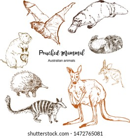 Australian pouched animals vector illustration. Echidna, bandicoot, duckbill and kangaroo with numbat, quokka and flying fox. Exotic forests and zoo australian pouched animals, sketch.