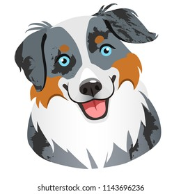 Australian shepherd dog face portrait cartoon illustration.  Cute friendly blue merle tricolor herding dog smiling with tongue out. Pets, dog lovers, animal themed design element isolated on white,