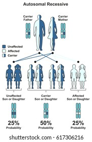 Autosomal Recessive Hereditary Trait infographic diagram including parents father and mother probability of son and daughter to be affected unaffected or carrier for genetic science education