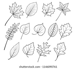 autum leave hand drawing