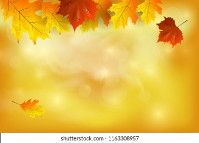 Autumn background with colorful leaves. Vector illustration. There is a place for your text.