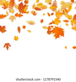 Autumn background with golden maple, oak and others leaves. EPS 10