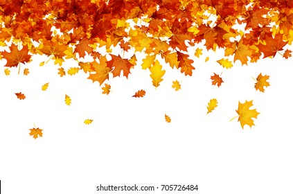 Autumn background with golden maple and oak leaves. Vector illustration.