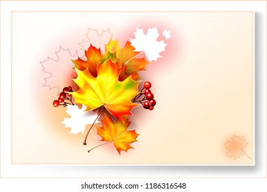 Autumn background with leaves. Vector maple leaf. Vector rowanberry.