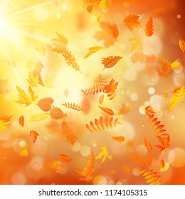 Autumn background with natural leaves and bright sunlight. EPS 10