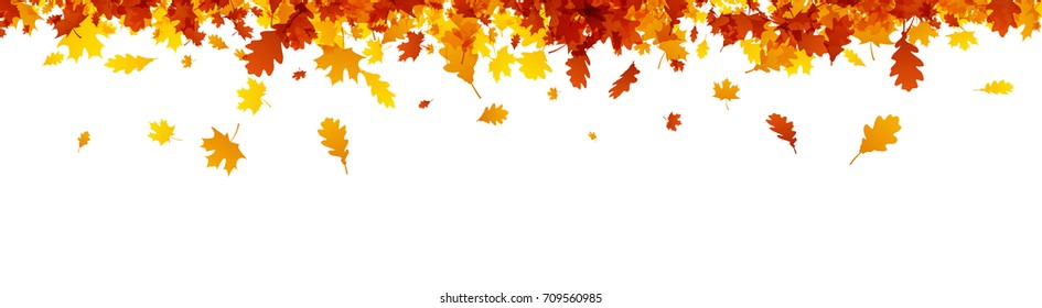 Autumn banner with golden maple and oak leaves. Vector  illustration.