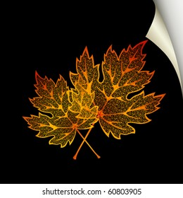 Autumn black  background with maple leaves