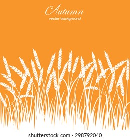Autumn card with grass and spikelets on orange background. Perfect  cards for any other kind of design, birthday and other holiday