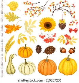 Autumn Collection of elements for your design with pumpkins, sunflower, leaves, cones, acorns, ears, branches of rowan and Oriental Bittersweet, vector illustration.