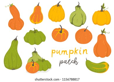 Autumn collection of pumpkin set elements design with different vegetables pumpkins oriental bittersweet vector illustration. Green, oranges and yellow symbols