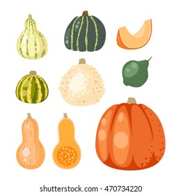 Autumn collection of pumpkin set elements design with different pumpkins oriental bittersweet vector illustration