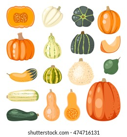 Autumn collection of pumpkin set elements design with different vegetables pumpkins oriental bittersweet vector illustration. Green and brown oranges symbols