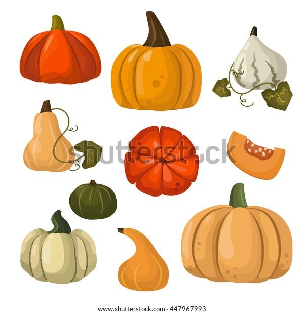 Autumn collection of pumpkin set elements design with different pumpkins oriental bittersweet vector illustration