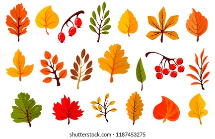 Autumn colorful leaves set isolated on white background. Cartoon leaf collection in flat style. Vector illustration