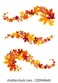 Autumn colorful leaves. Vector illustration.