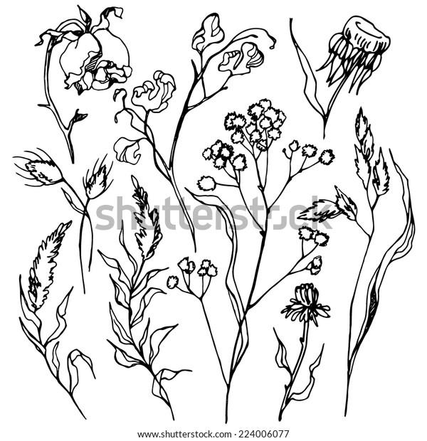 Autumn Dried Herbs Set Autumn Grass Stock Vector (Royalty