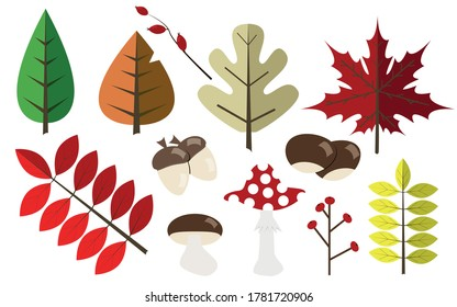 Autumn elements. Different leaves of different colors and autumn crops. Set of autumn symbols for use in design.