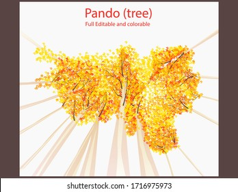 autumn Flat Vector illustration Quaking aspen Pando tree editable