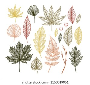 Autumn. Hand drawn vector illustrations. Set of fall leaves. Forest design elements. Perfect for seasonal advertisement, prints, posters, invitations etc