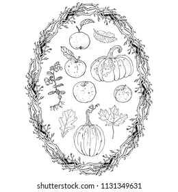 Autumn harvest clipart set: oval wreath branches frame, pumpkins, apples, lingonberry, oak, maple falling leaves. Fall seasonal decoration, coloring page. Hand drawn line art vector illustration.