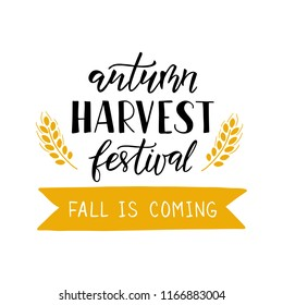 Autumn Harvest Festival - hand drawn lettering with wheat. Harvest fest poster design. Autumn festival invitation. Fall party template. For postcard or invitation card, banner. Vector illustration.
