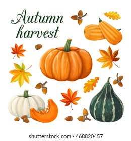 Autumn harvest. Pumpkins. Vector illustration on a white background executed in a realistic style.