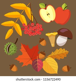 Autumn harvest - rowan berry, apple, half of apple, chestnut, acorns, colorful (red, yellow, brown) leaves, mushrooms - chanterelle and porcini. Vector illustration in flat style isolated on brown.