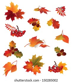 Autumn icon set. Fall leaves and berries. Nature symbol vector collection isolated on white background.