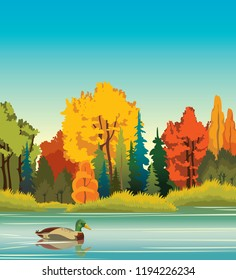 Autumn landscape - cartoon duck swimming in the blue calm lake on a autumn forest background. Nature vector illustration. Animal wildlife.