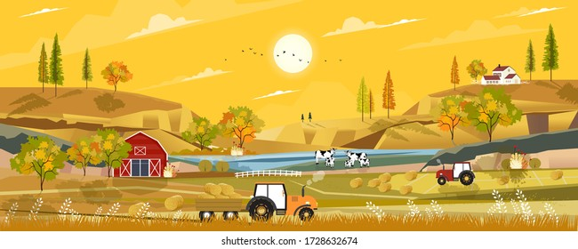 Autumn landscape with sunrise view on harvested field with farmhouse,tractor, wood barn,cows and straw bales in the countryside,Panorama view of farmlands in fall season with orange foliage.