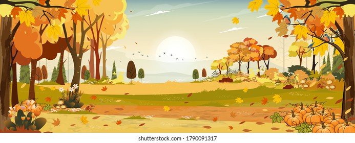 Autumn landscape wonderland forest with grass land, Mid autumn natural in orange foliage, Fall season with beautiful panoramic view with sunset behind mountain and maples leaves falling from trees