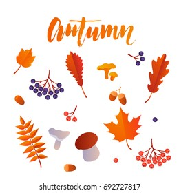 Autumn leaf foliage icons of oak acorn, maple or elm and rowan with berry and mushroom. Vector isolated elements for September autumnal sale promo poster, leaflet or web banner.