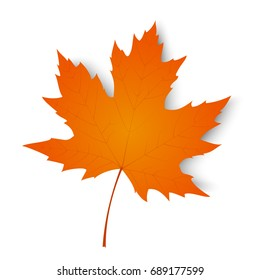 Autumn leaf. Autumn maple leaf isolated on a white background. Vector illustration