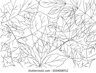Autumn leaf shapes black and white coloring page