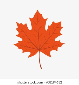 Autumn leaf. Vector.