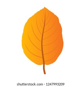 autumn leaf vector, hornbeam leaf