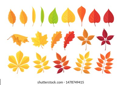Autumn leave. Set of Botanical forest plants, yellow, red autumn leaf, fallen dry leaves isolated on white. Cartoon leaf collection in flat style. Vector illustration.