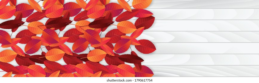 Autumn leaves banner or header. Fall background. Red and orange foliage on wooden board. Thanksgiving season holiday concept. Realistic 3d vector illustration.