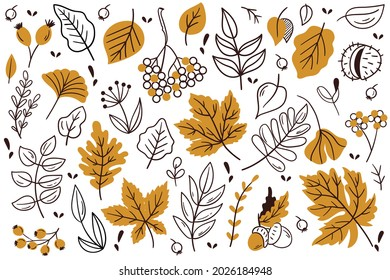 Autumn leaves and berries. Hand drawn autumn forest leaves set.