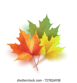 Autumn leaves. Bright colourful autumn maple leaves. Template for placards. Seasonal sale in shop. Vector Illustration