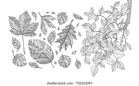 Autumn leaves and dog rose branch. Happy thanksgiving. Vector artwork. Black, white. Coloring book pages for adults and kids. Set collection. Bohemia concept for greeting card, boutique logo, label.