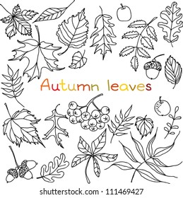 Autumn leaves doodles set