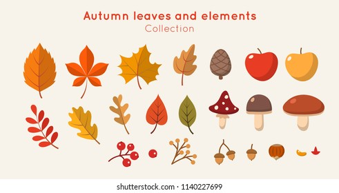 Autumn leaves and elements collection in flat style. Different leaves, mushrooms, nuts, berries. Vector illustration design template