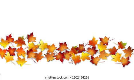 Autumn leaves. Fall colorful maple leaves border on white background. Vector illustration