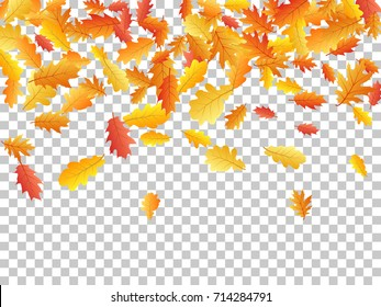 Autumn leaves falling down vector illustration. Red, yellow, orange and brown dry oak tree leaves background autumn pattern on transparent.