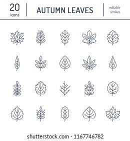 Autumn leaves flat line icons. Leaf types, rowan, birch tree, maple, chestnut, oak, cedar pine, linden,guelder rose Thin signs of nature plants