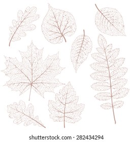 Autumn leaves, isolated dried leaves set. EPS 10 vector file included